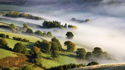 自然,谷,性质,雾,早上,树木