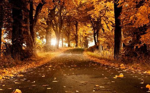 公园,秋天