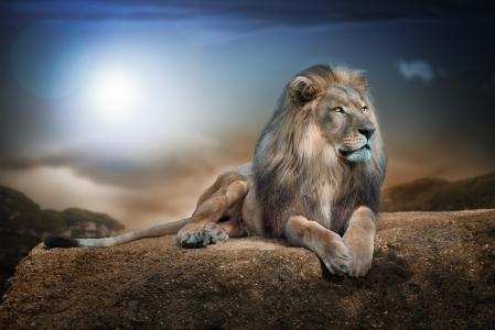狮子,石头,看