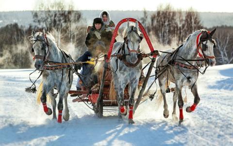 冬天,三驾马车,人,马,热情,乐趣