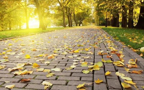 公园,胡同,秋天