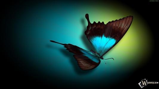蝴蝶,背景