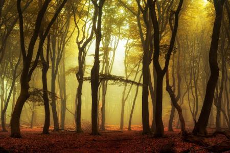 性质,秋季,森林,早上,雾,日出,光