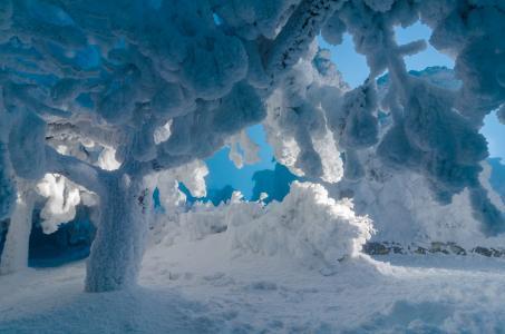 冬天,性质,雪,树,冰