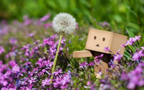 丹波,蒲公英,花,植物,粉红色,草,春天,宏