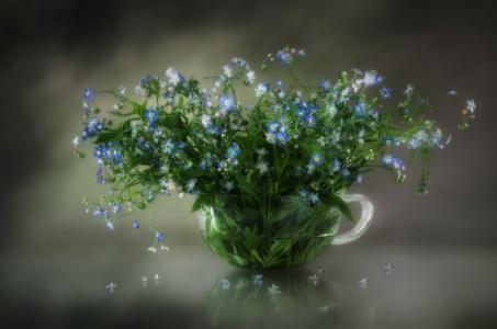 杯子,鲜花,勿忘我,夏天