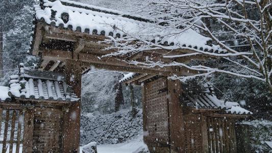 盖茨,山寺,日本,冬季景观,雪,树木