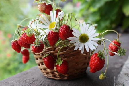 照片,草莓