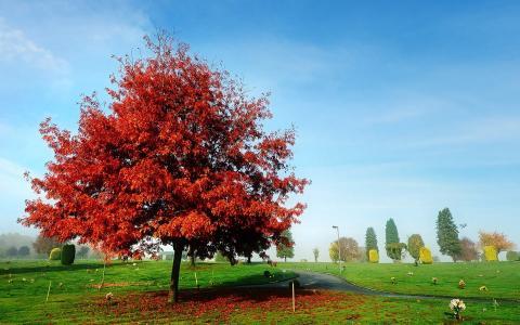 红,美女,秋,草