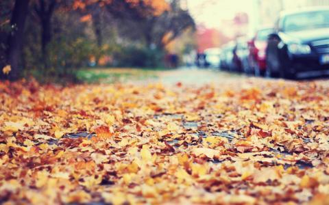 路边,汽车,叶子,秋天