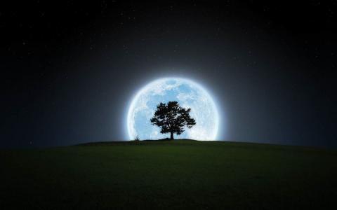 星星,夜,树,月亮,天空