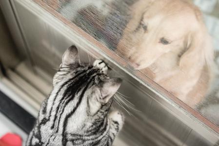猫,狗,朋友