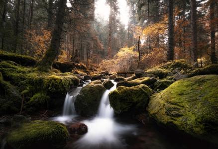 阿德南Bubalo,自然,秋天,森林,树木,石头,小溪,苔藓