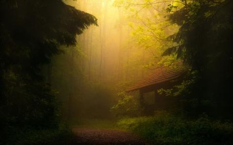 照片,房子,森林,自然,早上,雾
