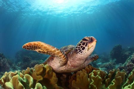 动物,乌龟,水,底部,海洋,海洋,珊瑚