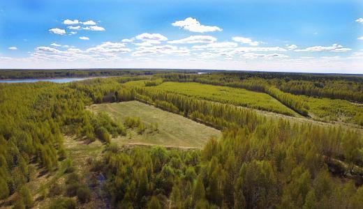 AristovArt,自然,景观,自然,森林,森林
