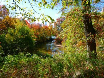 纽约,布鲁克林,公园,池塘