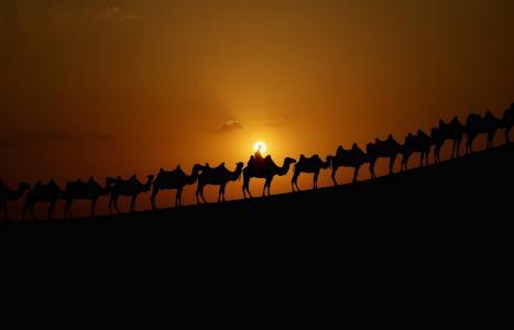 大篷车,骆驼,沙漠,日落