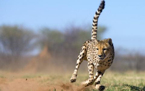 尾管,跑道,防尘柱,猎豹