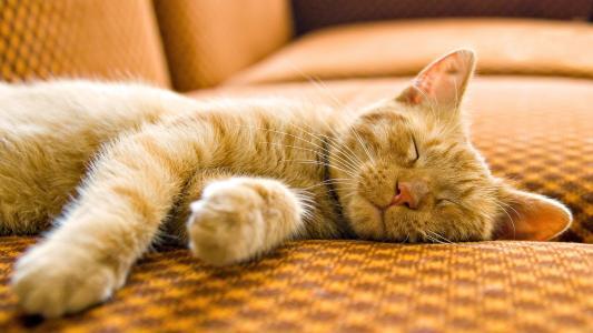 沙发,猫,睡觉,宏,猫