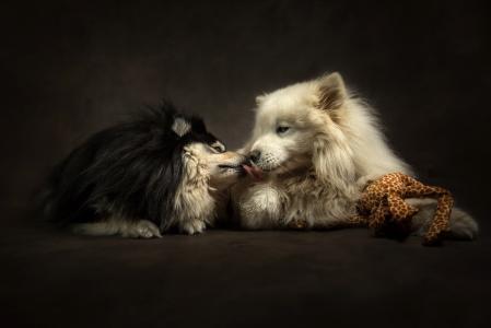 动物,狗,情侣,温柔,亲情