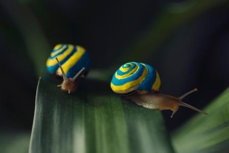 照片,宏观,创意,蜗牛,积极