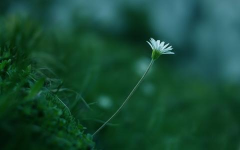 白色,植物,干,草,花,绿色,颜色