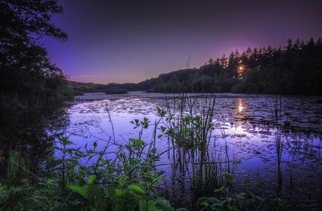 自然,森林,湖,草,日落
