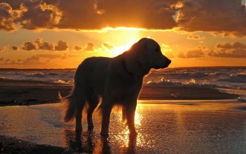 海,水,天空,狗,日落