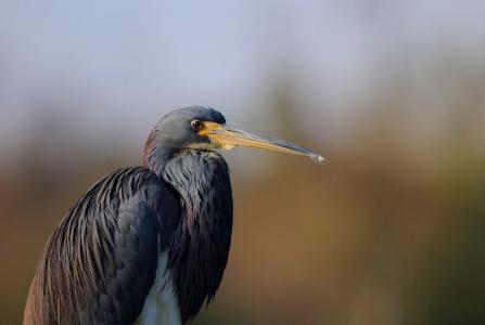 极简主义,鸟,背景,沉默。
