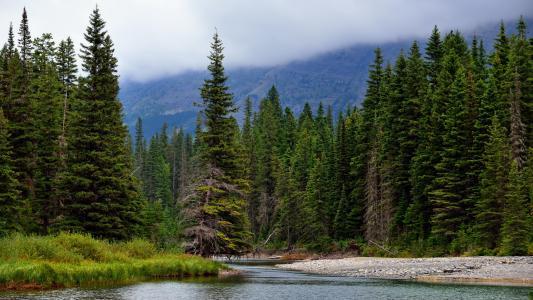森林,河,冷杉,性质,山