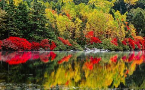 景观,性质,树,秋,湖,森林