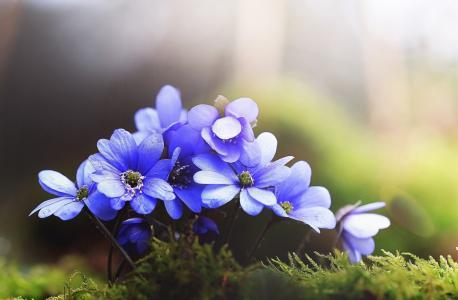 宏观照片主题,花,紫罗兰色