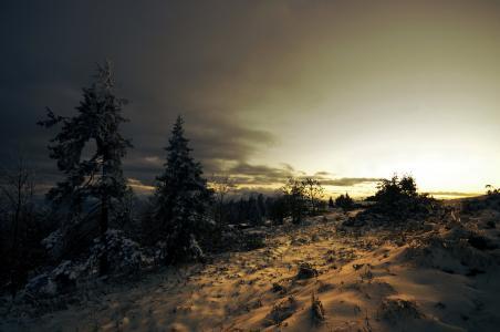 云,日落,针叶树,冬季,冷杉,雪,树木