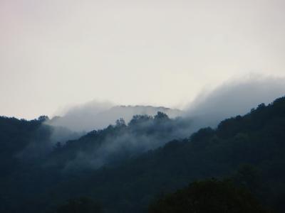 山,雾,山,云,绿色,森林,植物,树木,夏天,天空,天堂,高度,顶部,美丽