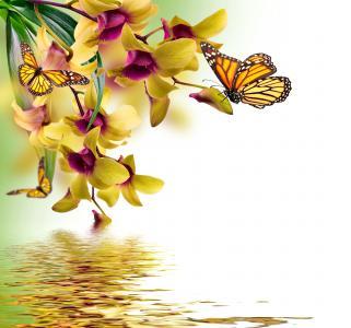 蝴蝶,photoshop,艺术,兰花,花朵,春天,美丽