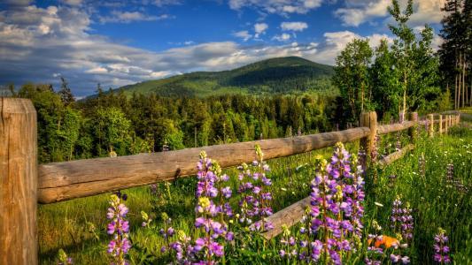 山,天空,森林,围栏,鲜花