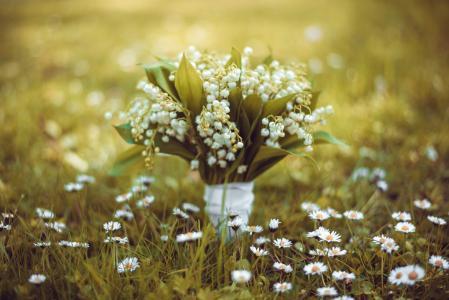 自然,春天,草,花,雏菊,花束,铃兰