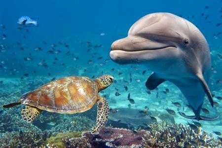 水,动物,底部,海豚,龟,鱼
