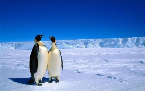 动物,企鹅,南极洲