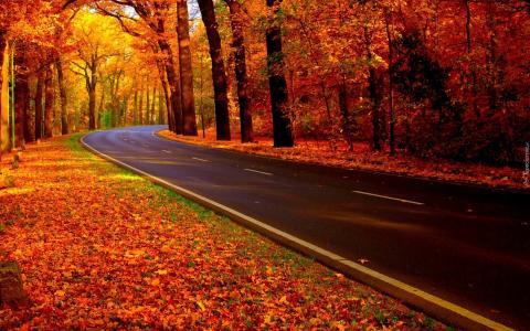 秋天,道路,树木
