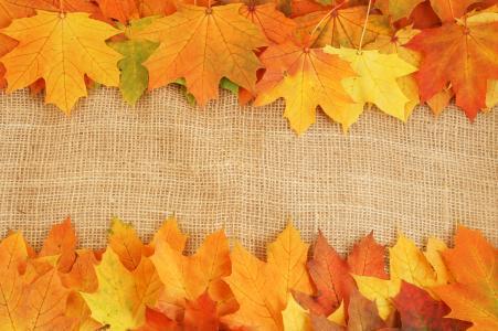 鲜艳的色彩,静脉,秋天,树叶