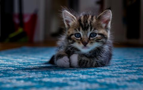 小猫,视线,宝贝