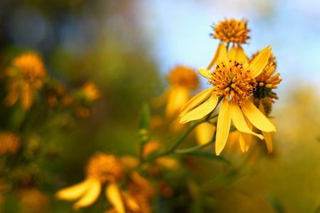 鲜花,宏,美,花瓣