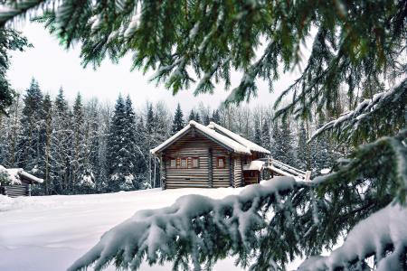 冬天,雪,房子,树木,云杉,针,树枝,爪子