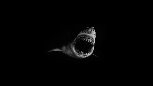 鲨鱼,恐惧,黑暗