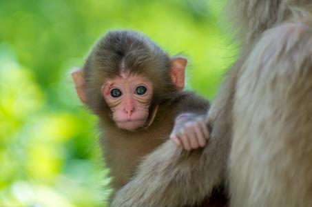 猴子,孩子,背景