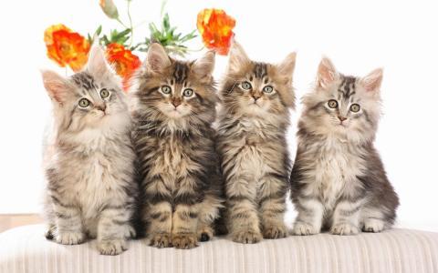 花,小猫,四个