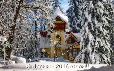冬季,云杉,高加索,红波利亚纳,新年快乐,Nikishin Evgeny