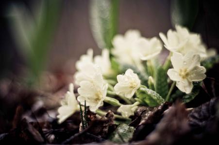 滴,绿色,植物,地球,叶子,花,白色
